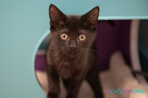 contact Second Chance Cats of West Michigan