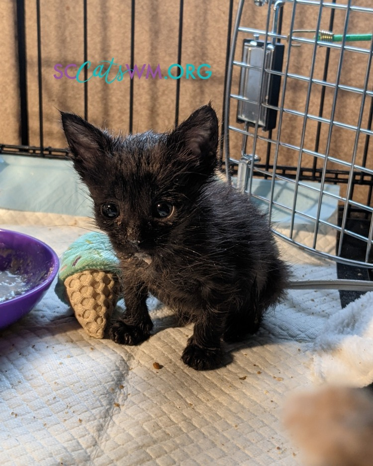 Second Chance cat of west Michigan would love if you could buy her items on her Wishlist!