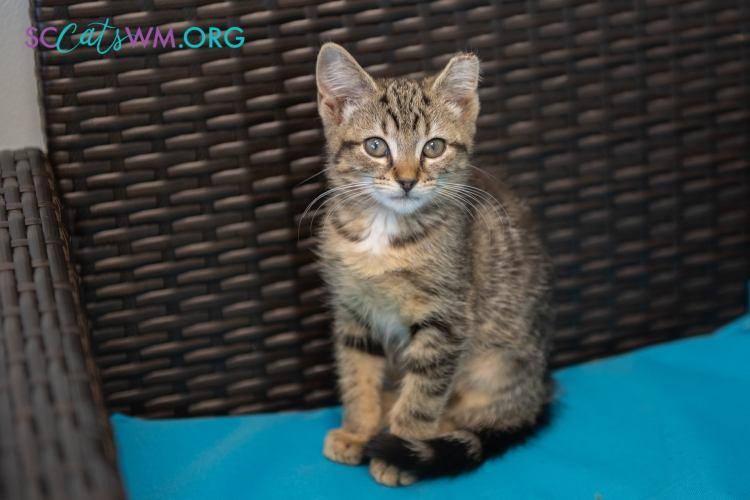 Foster Cats in Grand Rapids, Michigan